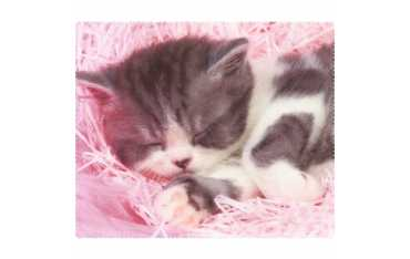 Ściereczka mikrofazowa - śpiący kociak 2