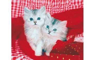 Ściereczka mikrofazowa - kociaki w kojcu