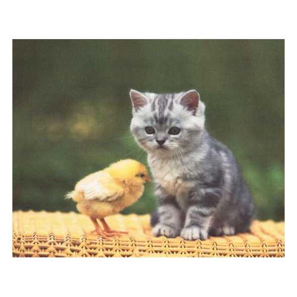 ściereczka do okularów szkieł z nadrukiem kociak z kurczakiem