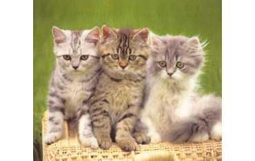 Ściereczka mikrofazowa - trzy kociaki