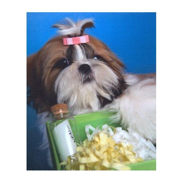 ściereczka mikrofazowa do czyszczenia okularów szkieł z nadrukiem pies z prezentem