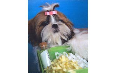 Ściereczka mikrofazowa - pies z prezentem